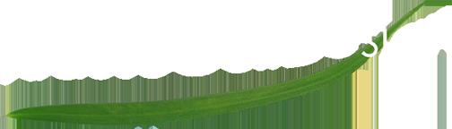 Krause Golf Design: Design - Renovation - Masterplaning